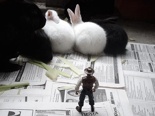 Bunnies_200802