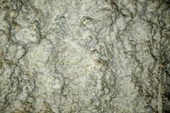 Gypsum (stevesheriw) Tags: newmexico carlsbadcaverns carlsbadcavernsnationalpark cave cavern unesco worldheritagesite bigroom gypsum formations