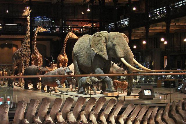 La galerie de l'Evolution (Museum National d'Histoire Naturelle)