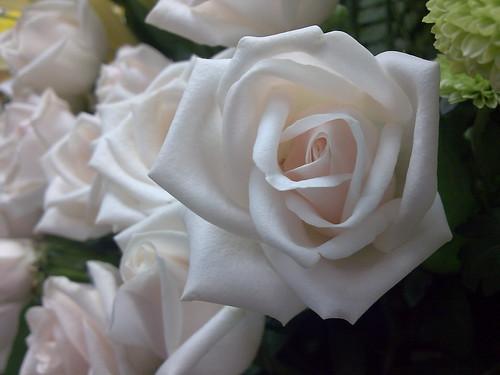 white roses by noel ann~.