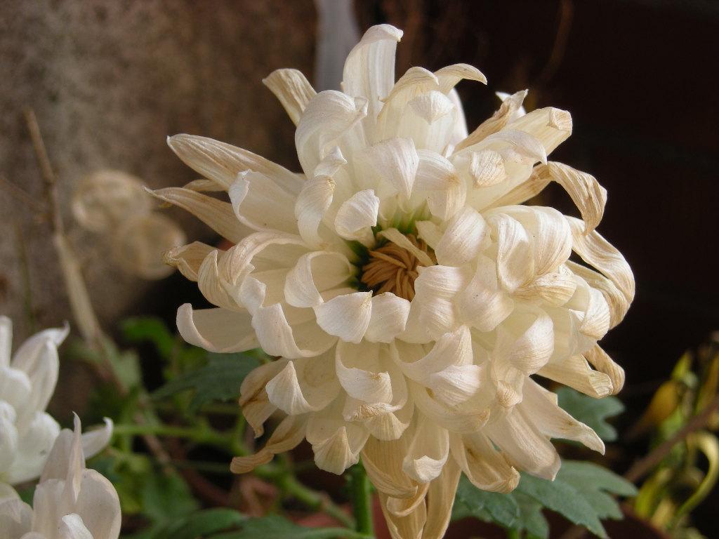 Plantas en el Sur (Iniciado por Girasol) 2621482062_baccd40608_o