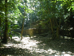 Palenque (Sathya.H) Tags: voyage travel archaeology mexico pyramid palenque vegetation chiapas far precolombian
