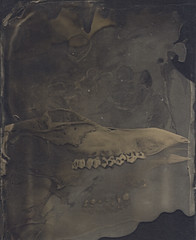 Wet Plate Collodion (Witness to Light) Tags: witnesstolight