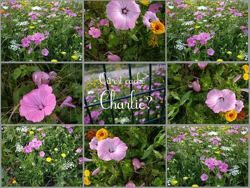 CHERCHER CHARLIE