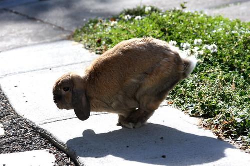 Bejing Bunny - Handstand Event