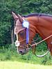 Ella Bollebygd (nenne84) Tags: horse animal hästar galope abigfave