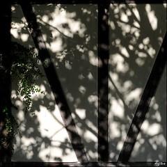 Fachwerk im Schatten / Half-timbered shadow (digitus_malus) Tags: shadow nikkor schatten halftimbered fachwerk d300 35mmf2af