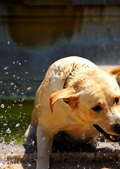 Just too hot! (victoria0805) Tags: italy dog rome water fountain villaborghese nikond40 theloveshack