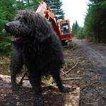 Dougal air pios fiodha thumbnail