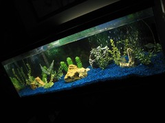 IMG_1681 (ayeyorayo) Tags: fish tank clean fishtank newlight cleanfishtanklighted
