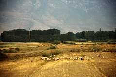 Between Pogradec and Maliq (Albania) - Rural Landscape (Danielzolli) Tags: road rural sheep carretera shepherd strasse paysage landschaft schafe balkan ovejas maliq shqiptar lndlich balcan albanien shqiperi shqiperia albanie rurallandscape schafherde pejsaz shqipria pogradec roadcondition pogradeci maliqi kor bakany kora berlandstrasse arberia albansko strassenverhltnisse oveijas