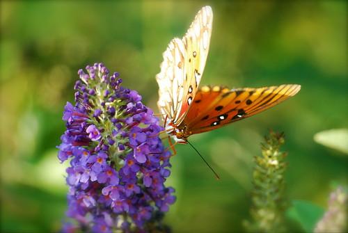 butterflies: change caterpillars can believe in