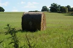 Hay Bale in Field (gmj49) Tags: scotland landscapes sony scottish m gmj a350 thebestofday gnneniyisi shareyourtalent bestofbritishnature photosrus vanagram