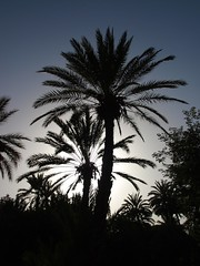 P7041744 (Trysk ) Tags: sahara desert oasis morocco maroc atlas marrakech majorelle souk menara koutoubia palmeraie oued jaamalelfna