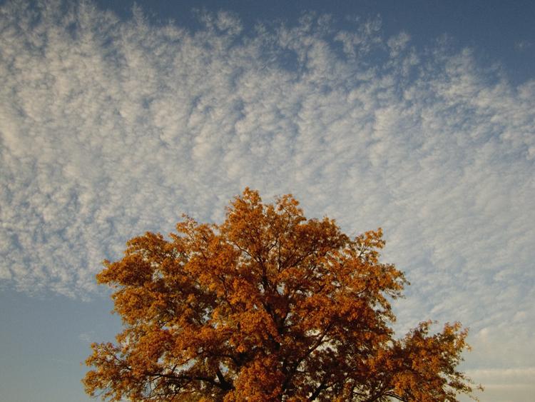 fall foliage mutton clouds