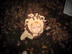 Ferocious lion