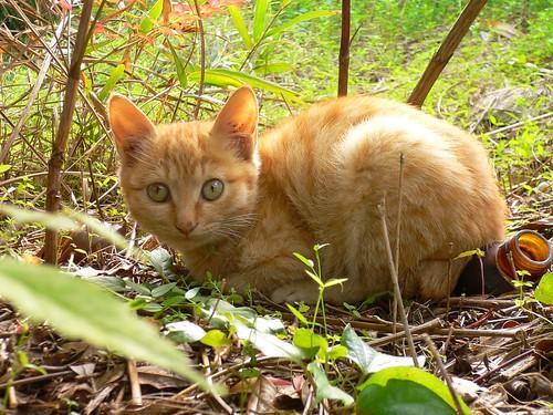 Stray Cat #16
