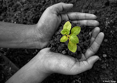 go green (bnilesh) Tags: plant black hand soil plantation soe enviornment gogreen supershot abigfave worldbest anawesomeshot supereco theunforgettablepictures theunforgettablepicture