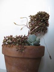 IMG_0161 (Plantules) Tags: