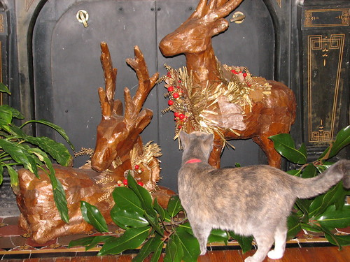 fireplace deer being investigated