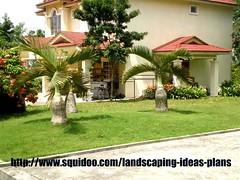 bottle palm (rhmn) Tags: tree palms bottle landscaping palm tropical plans cycad ideas mascarena hyophorbe lagenicaulis