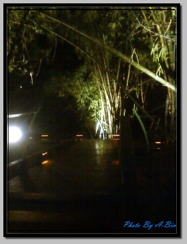 Bamboo grove 01