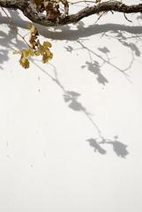 SeNCiLLeZ (Luna De Cera) Tags: sombras vergara riglos nikond80 a3b lunadecera raquelserrano tff1 tff2 tff3 retofz090225