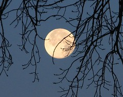Full Moon Setting (Don3rdSE) Tags: lighting trees winter lake ice nature water night sunrise landscape natural iowa ia serene breathtaking moonset moonscape desmoinesiowa aplusphoto theunforgettablepictures naturewatcher platinumheartaward canong9 multimegashot breathtakinggoldaward goldenheartaward gha6 theperfectpinkdiamond don3rdse micarttttworldphotographyawards micartttt desmoinesgrayslakepark