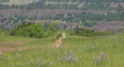 Tom McCall Preserve at Rowena