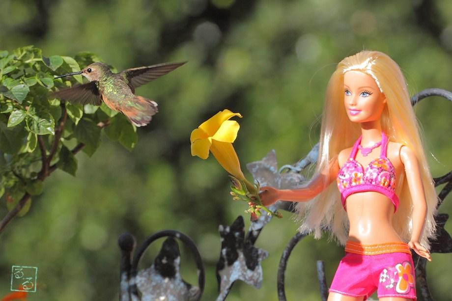 Allen's Hummingbird 051011