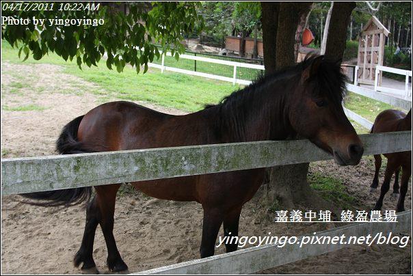 嘉義中埔_綠盈農場20110417_I6858