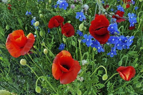 Primavera multicolor - Multicolor spring by Marco Antonio Losas
