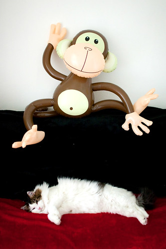 Moo and Monkey