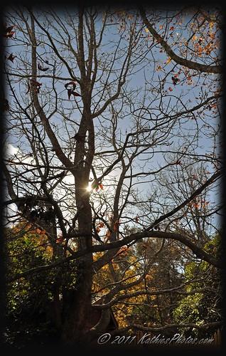 162-365 The winter sun peeking through