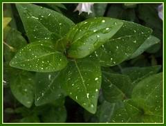 Verdes (anabelnikolai) Tags: hojas galicia portodoson baroa kddtecendoredes05