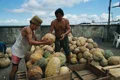 JPBR-1493-8-B World Bank (World Bank Photo Collection) Tags: brazil food latinamerica vegetables workers amazon markets vegetable squash worldbank unload