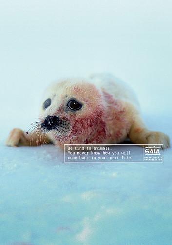 GAIA - Seal