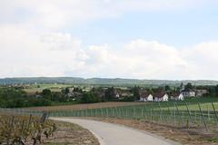 Walk (mightymarce) Tags: home switzerland walk naturewalk