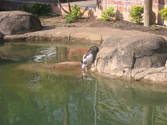 St Lucia, South-Africa (14/08/07) (Djinne) Tags: water pool cat bibs