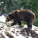 Grizzly Bear Vacations