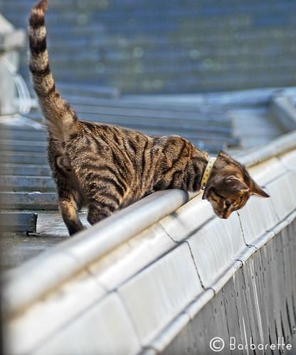 cat's-commando3