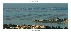 Panorama sur Balaruc le Vieux et l'Etang de Thau (Michel Seguret thanks you all for + 7.700.000 view) Tags: haven france nature port fun pond nikon flickr harbour postcard mooring pro estanque michel hafen teich ports languedoc languedocroussillon smrgsbord photographe hrault herault cartepostale stagno seguret nikond200 etangdethau kartpostal golddragon balaruc myphotobook internationalgeographic dragongoldaward worldtrekker checkoutmynewpics oletusfotos flickrpopularphotographer michelseguret