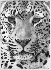 Leopard 02 (pbradyart) Tags: portrait bw art pen ink artwork drawing leopard bigcat artcafe naturesfinest goldenglobe blueribbonwinner artisticexpression aworkofart 25faves platinumphoto aplusphoto diamondclassphotographer flickrdiamond 75faves naturewatcher platinumheartaward goldwildlife 100commentgroup worldglobalaward globalworldawards visiblytalented