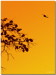 up there (Lenareh) Tags: tree up silhouette branches it helicopter twigs imago superaplus aplusphoto diamondclassphotographer flickrdiamond lenareh theperfectphotographer imagoismthursday imagothursday litratistakami