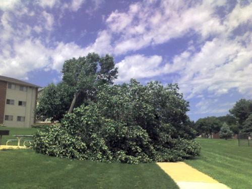 Fallen Tree after a tornado