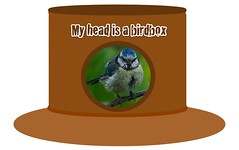 """My head is a birdbox"" hat"