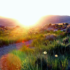 my trail... (janoid) Tags: utah alpine xo yourock xoxoxox mytrail janslightstyle janalicious janoidmagic ttttttttttttttttttttttt whereiwatchthesunsets yourheartiseverywhere