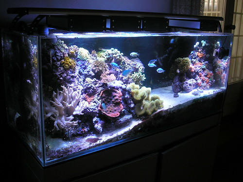 aquaillumination reef