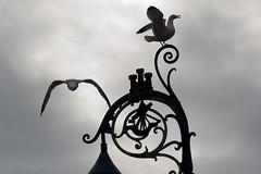 Birds 2 (Unh@ppyb@st@rd) Tags: uk scotland blackwhite rothesay isleofbute