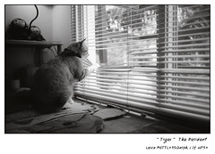 """ TIGER "" The resident (Black Theory) Tags: leica home cat peak hp5 ilford m6ttl leicam6ttl 352asph summicron352asph"